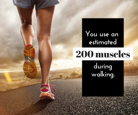 you-use-an-estimated-200-muscles